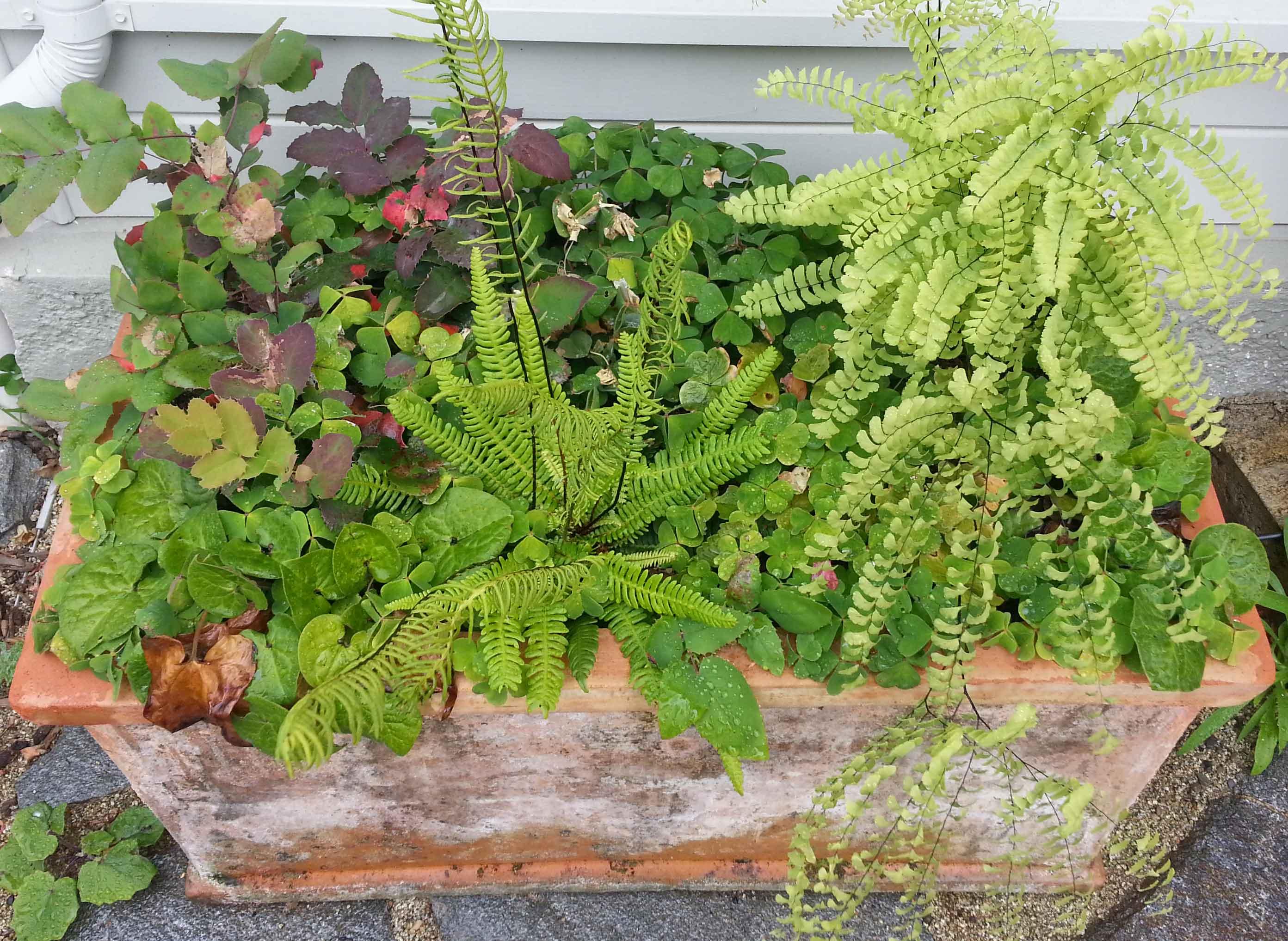 Ornamental Planters