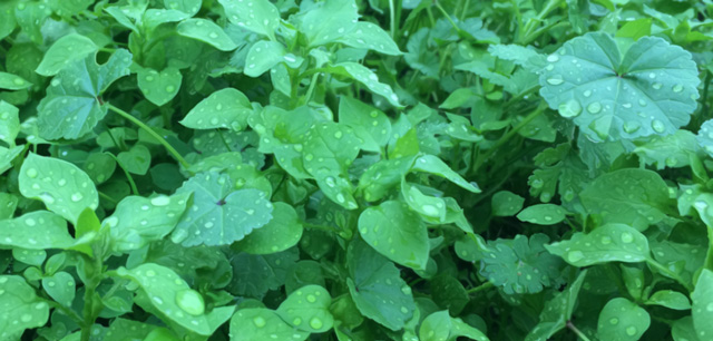 Wet Weeds Welcome Winter Weather