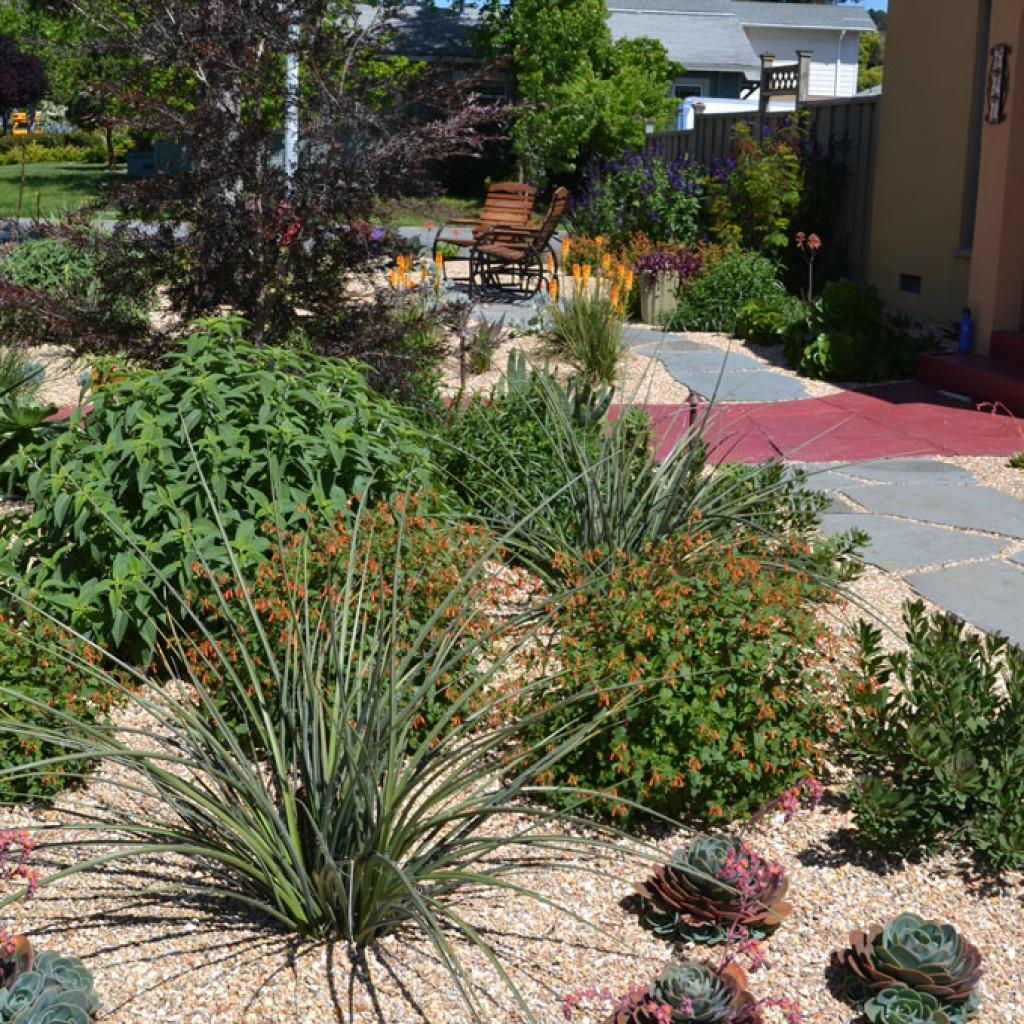 Dry Garden Magic