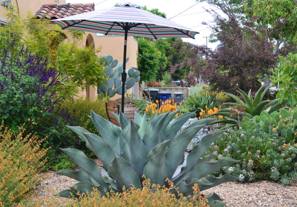 Succulent Garden with Agave